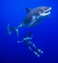 Spectacular underwater shots by Juan Oliphant, a multi-talented photographer, and ocean diver based in Haleiwa, Hawaii, United States. Juan focuses mainly on… Under The Water, Under The Sea, Cool Sharks, Great White Shark, Shark Week, Animals Of The World, Underwater Photography, Ocean Life, Sea Creatures