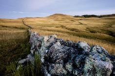 Vestígios das sesmarias, taipas de pedras eram erguidas com as rochas espalhadas nos campos e serviam para dividir as propriedades