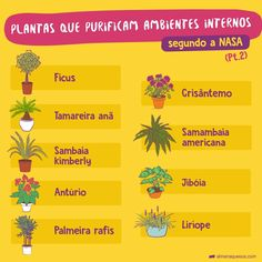 Dicas de plantas que purificam o ambiente ✨😮 - - - Plants Are Friends, Cactus Y Suculentas, Plantar, Ficus, Green Life, Botany, Garden Projects, Vegetable Garden, Home Deco