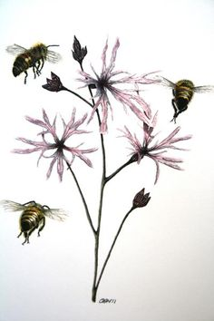 Ragged Robin, botanical drawing by Cath Hodsman. British Wild Flowers, Wildflower Drawing, Bee Painting, Drawing School, Fantasy Fiction, Botanical Drawings, Natural History, Art Forms, Insects
