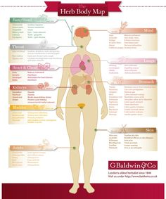 The Herb Body Map - Wholeheartedly Healthy