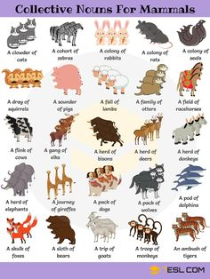Useful Collective Nouns For Animals in English - 7 E S L Animal Group Names! Learn useful list of collective nouns for animals (turkeys, owls, crows,.) with example sentences, video and ESL printable worksheets. Learn English Grammar, English Writing Skills, English Vocabulary Words, English Idioms, Learn English Words, English Phrases, English Study, English Lessons, English English