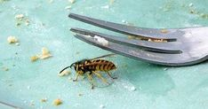 Wespen einfach und effektiv vertreiben - diese Tricks wirken