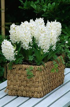 basket of white hyacinth Daffodils, Tulips, White Flowers, Beautiful Flowers, White Hyacinth, Spring Bulbs, White Gardens, Spring Flowers, Beautiful Gardens