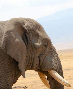 An elephant in the Serengeti.