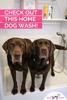 Built In Dog Wash Renovation Reveal ⋆ Wear Wag Repeat Dog Feeding Station, Dog Washing Station, Dog Grooming Shop, Dog Spaces, Chocolate Labs, Dog Area, The Perfect Dog, Dog Rooms, Dog Shower