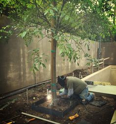 """Tree boxes getting welded in.  The pebble tree mulch will be 4"""" lower than the DG yard surface... ...should be very cool.  #hollisterdesignstudio #hollisterstudio #landscapedesign #landscapedesigner #plants #gardens #design #designlovers  #droughttolerant #gardendesign #napa #sonoma #instagardeners #garden  #gardener #garden_styles #gardendesign #gardenlife #garden_explorers #gardenart #gardensofinstagram #gardenlover #gardenporn #gardentime #gardeninspiration #gardenview #gardenwalk…"""