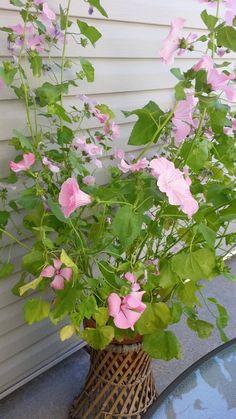 a49d5fa62a24e8bda83a1cd100e5961f Unusual Non Flowering House Plant on unusual ferns, unusual tropical house plants, unusual roses, unusual indoor house plants, unusual perennials, unusual trees,