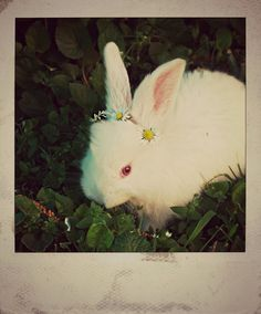 Bunny wears a crown of flowers - August 2, 2012 // must do to my own future bunny