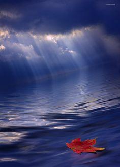 Adrift by Ron Jones