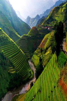 Rice Terraces, Yuanyang County, Vietnam, Por Pathompat