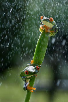 Rain & Shine  |  ©Kutub Uddin