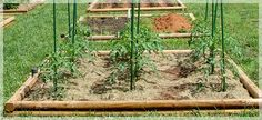 Terrific Tomatoes!  Grow your best tomatoes ever. Use our tips to bring in a fantastic crop.