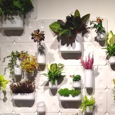 Mod magnetic containers for living walls by Urbio...rearrange them as often as you like!  #garden #icff