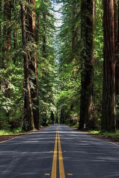 wallpaper nature Road Print featuring the photograph Avenue Of The Giants by Rick Pisio Backgrounds White, Photo Backgrounds, Dslr Background Images, Photo Background Images, 4k Background, Natural Background, Beautiful Nature Wallpaper, Beautiful Landscapes, Best Nature Wallpapers