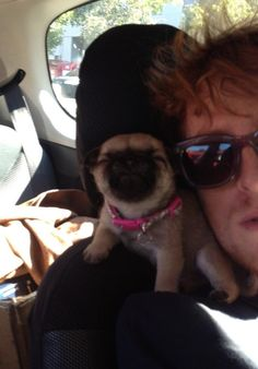 Taking front-seat selfies with her besties. | 22 Things Poncho The Pug Is Better At ThanYou Cuteness Overload!