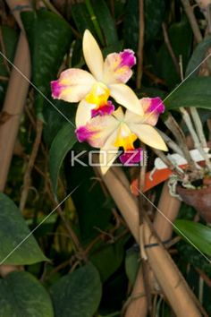 image of flowers and leaves. - Close-up image of flowers and leaves.