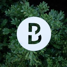 This B hangs out in a tree. Font: Custom. #36DaysofType