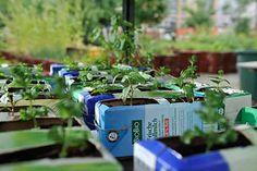 Urban gardening, Prinzessinnengarten