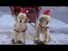 Santa Buddies Sing Along - We Wish You a Merry Christmas (met tekst) Christmas Shows, Christmas Scenes, Christmas Animals, Christmas Music, Disney Christmas, Christmas Love, Christmas Carol, Christmas Videos, Xmas