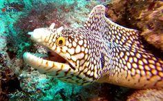 Scuba diving - Underwater