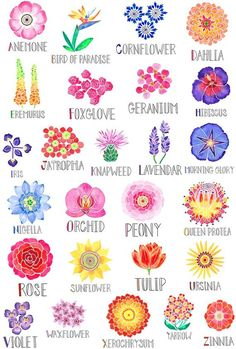 An alphabet of flowers Each watercolor illustrated flower is accompanied by hand lettered names A perfect gift for your favorite gardener your child or yourself Printed professionally on 110 lb cover paper Measures Rolled and shipped in a sturdy tube Acrylic Flowers, Watercolor Flowers, Watercolor Art, Easy Flowers To Paint, Painted Flowers, Simple Flower Painting, Flower Names, Flower Art, Art Floral