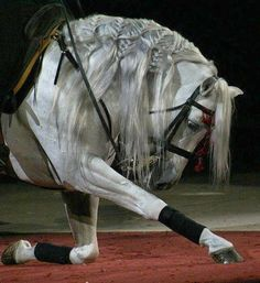 My mom wants me to train my horse to do this for a dressage freestyle... I wish!!
