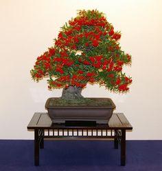 Bonsai Haus steffen r bonsaifan on
