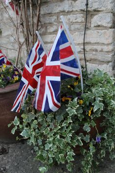 Jubilee fever has even reached our plant pots!