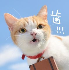 Japanese Travel, Japanese Cat, Cute Cats, Funny Cats, Cat Cafe, Neko, Kittens, Cute Animals, Old Things