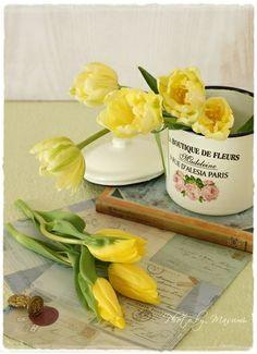 Yellow turip flowers.