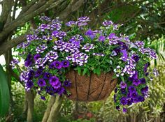 We've picked 14 of the best-looking hanging baskets in our Trial Garden. We'd love to know what you think --- vote for your favorites!