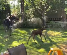Woman Accidentally Gives Adorable Moose Family The Best Day Ever - The Dodo Happy Dance, Kids Shows, Cute Gif, Best Day Ever, Good People, Good Day, Moose, Funny Animals, Pup
