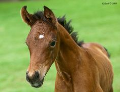 Adorable little Foal