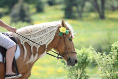 horses with diamond braids with flowers | ... horses chalking plaiting diamond weave mane tail showing braiding