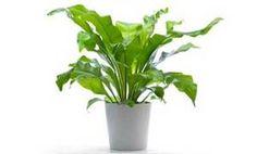 plants that clean the air INSIDE