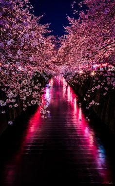 Sakura River - Cherry blossom in Meguro River, Tokyo, Japan Beautiful World, Beautiful Places, Beautiful Pictures, Beautiful Guys, Fotografia Macro, Destination Voyage, Tour Eiffel, Tokyo Japan, Beautiful Landscapes