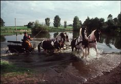 vintage everyday: More of Amazing Color Pictures of Daily Life in Poland in 1981 Franco Suisse, Warsaw Pact, Photographic Film, Central And Eastern Europe, Photographer Portfolio, Magnum Photos, Colorful Pictures, My Photos, Horses