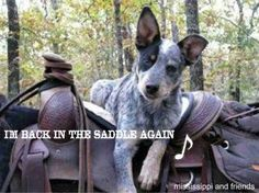 Blue heeler.. Need another one of these little guys