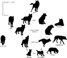 hierarchy of a wolf pack. | Note: The only gender-specific poses are male and female pup ...