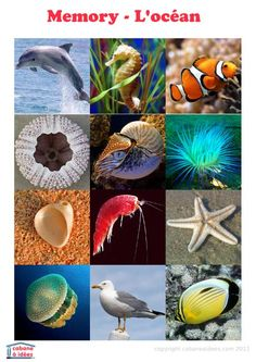 Jeu de mémoire avec de belles photos de la faune sous-marine... à imprimer gratuitement!