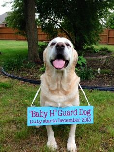 Oh my word! That is one of the cutest pregnancy announcements I've seen. You could use this idea for save-the-dates but instead of your dog it could be the brides dad.