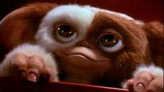 Gizmo, Gremlins I've wanted one of these ever since I was little.