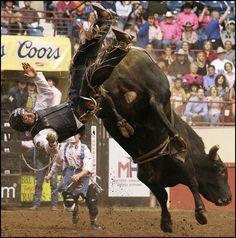 bull riding wrecks - Google Search