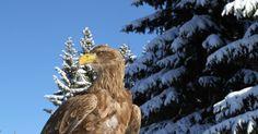 Naxoo Blog » 10 ans Ushuaia TV Ushuaia, Bald Eagle, Tv, Nature, Blog, Animals, Naturaleza, Animales, Animaux