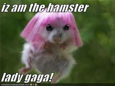 Gaga ooh la la kinda cute and kinda funny