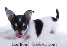 """I love """"tongue"""" pictures!"""
