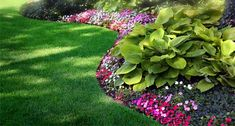 Hostas & impatiens- love the curving edge