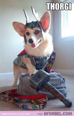 thorgi the cutest super hero in the universe dog halloween