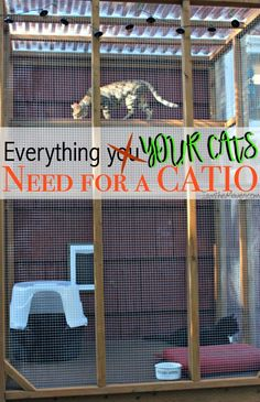 Everything You Need for A Catio Have your cats been trying to escape to the great outdoors? Maybe it's time to build them an outdoor cat enclosure! Here's a list of everything you need for a catio! Diy Cat Enclosure, Outdoor Cat Enclosure, Reptile Enclosure, Cat Cages, Cat Room, Cat Condo, Outdoor Cats, Outdoor Cat Kennel, Space Cat